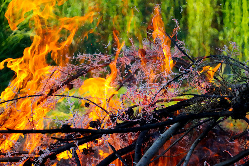 fire Burnigligth Burning Cleaning Day Fire Garden Grass Hot Nature Outdoors Smoke Twig