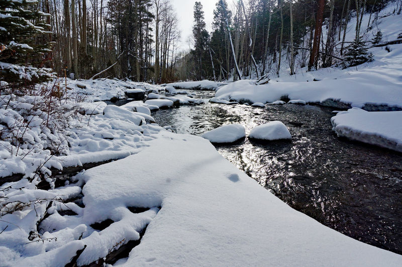 Frozen river stream amidst trees during winter