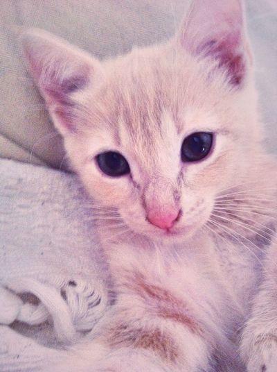 My cat Baby Kitty ❤️