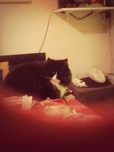 Katten Leja