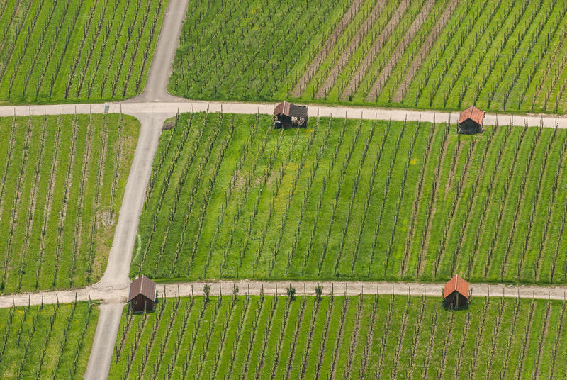 Agriculture Day Garden Green Green Color Hohenneuffen Huts Journey Non-urban Scene Outdoors Solitude Tranquility Vineyard Vineyard Path Weinberg