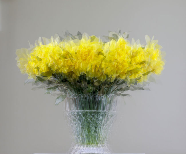 Close-up of yellow flowering plant in vase against white background