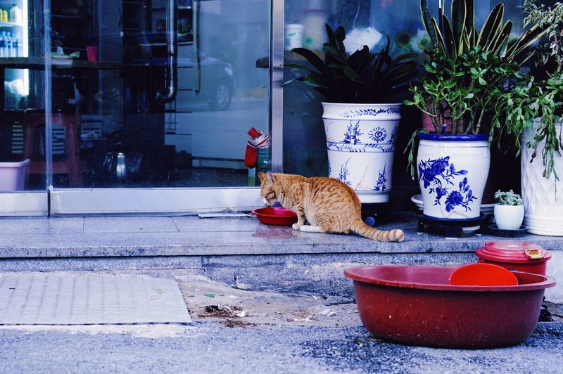 Cat sitting in a potted plant