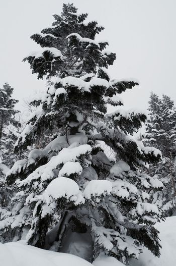 Close-up of tree against sky during winter