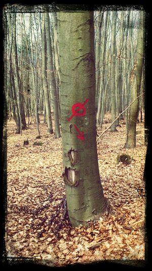 Trees Secret Signs