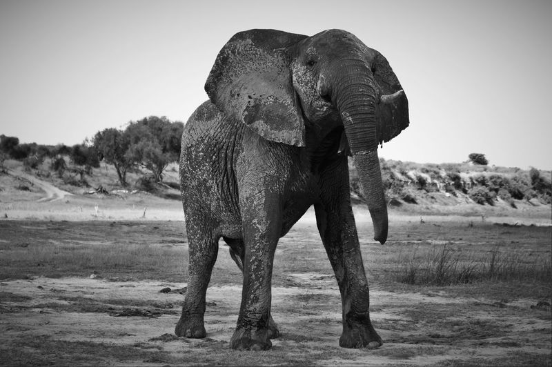 Low angle view of elephant standing against sky