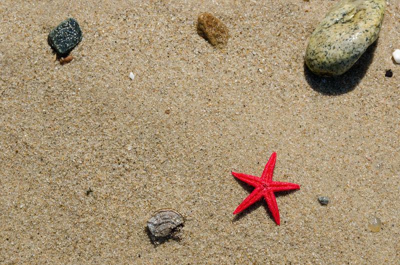 Sand Beach Shore Red Starfish  Vacations Star Shape Outdoors Beauty In Nature Summer Season  Seashore Red Starfish Copy Space Summertime Summer Vibes Rocks Concept Beautiful Nature Marine Life