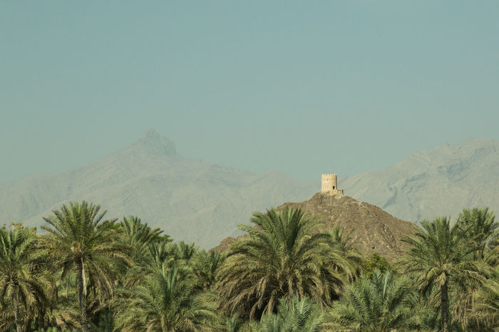 a lookout tower on the Al Hajar mountains surrounded by date palms Al Hajar Mountain Range Architecture Beauty In Nature Date Palms Day Fort Landscape Mountain Nature No People Outdoors Palm Trees Scenics Sultanate Of Oman Tower Tranquil Scene Travel Destinations Tree