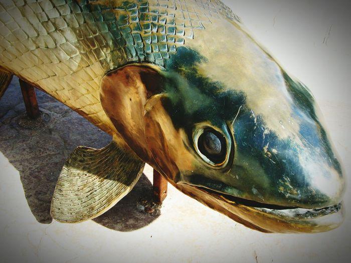 Fish Sculpture Sculpture Art Fish Head Taking Photos Hanging Out Denver Colorado