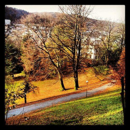 Autumn in Nygårdsparken , Bergen , Norway . travel mytravelgram bestoftheday bestshooter picoftheday. 1 november 2012