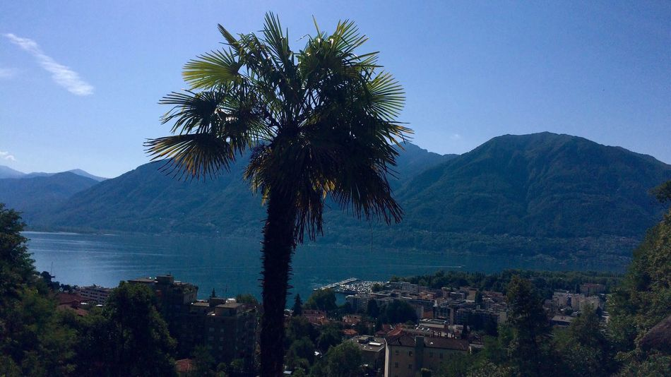Your Ticket To Europe view to Locarno from Madonna del Sasso Palm Tree Blue Sky Mountain Water