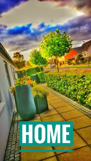 Hjem Home No People Tree Outdoors Danmark Esbjerg