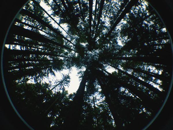 Fisheye Forest Trees Nature Beautiful Follow Me I'll Follow Back Followme The Great Outdoors - 2016 EyeEm Awards Welcome To Black Perspectives On Nature