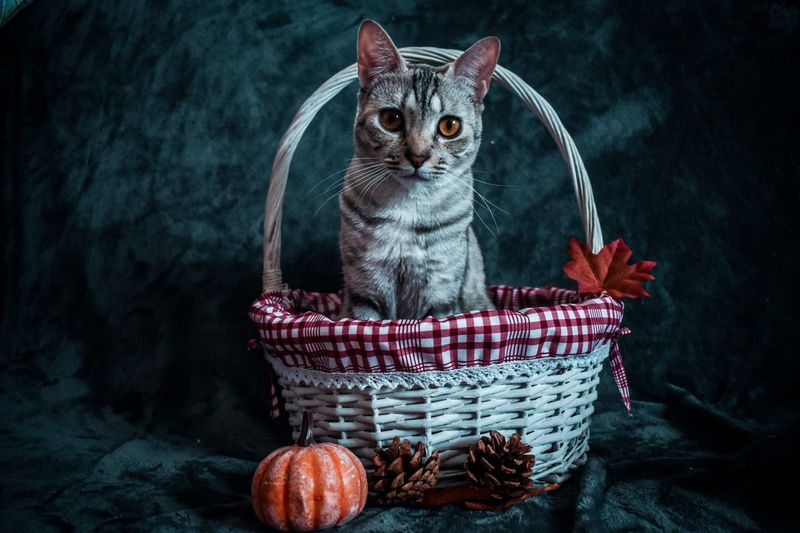 Cat sitting in basket