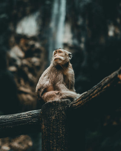 Monkey sitting on a tree