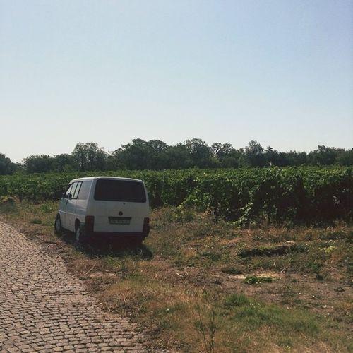 Такое ощущение,что ялта - это маленькая Италия .Сегодня гуляли мимо виноградников. классныйдень ☺️