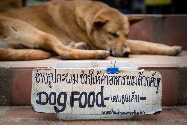 Dog is begging for food Begging Thai Animal Animal Themes Begging For Food Beggingdog Canine Day Dog Domestic Animals Foodstuffs Message Money No People One Animal Pets Relaxation Script Sleeping Social Issues Text