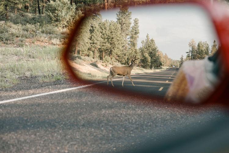 Cat sitting on road seen through car windshield