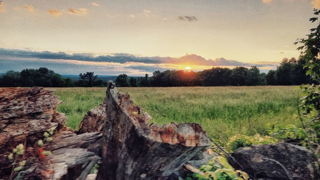 Sunset at Farmers Field & Dead Logs by the Stone Wall Plant Sky Landscape Tranquil Scene Land Tranquility Scenics - Nature Field Tree Environment Beauty In Nature Nature Growth No People Agriculture Non-urban Scene Sunset Sunlight Idyllic Rural Scene