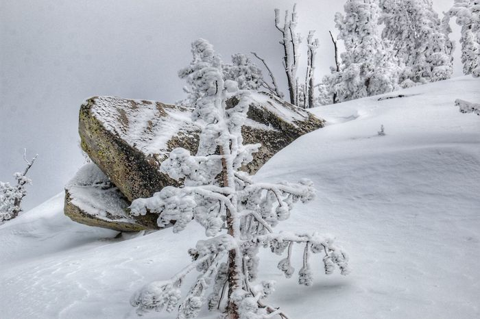 Winter Wonderland ❄ Winter White Color Tree South Lake Tahoe Rocks Cold Temperature Close-up Beauty In Nature Heavenly Ski Resort Tranquil Scene Mountain Sierra Nevada Mountains Gray Skies