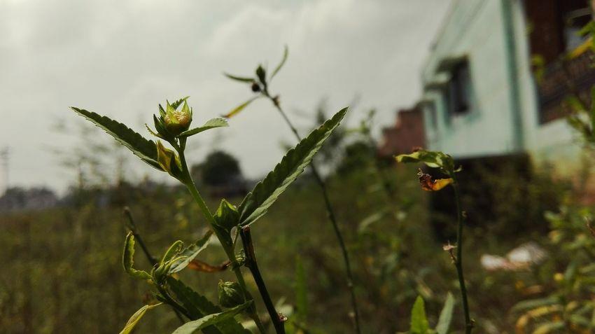 Nature again :)