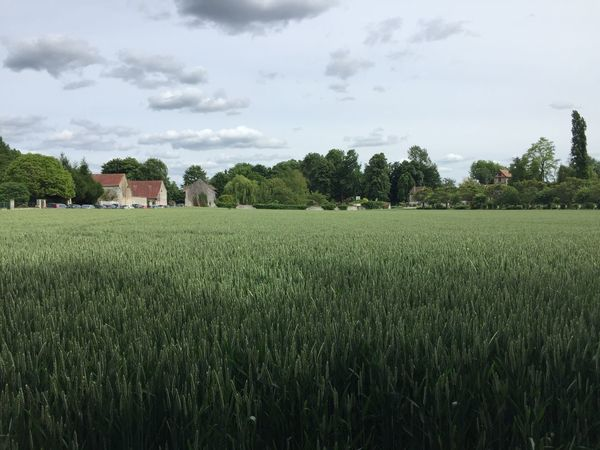 Agriculture Architecture Beauty In Nature Day Farm Field Grass Green Color Growth Landscape Nature No People Outdoors Rural Scene Scenics Sky Tranquil Scene Tranquility Tree Wheat