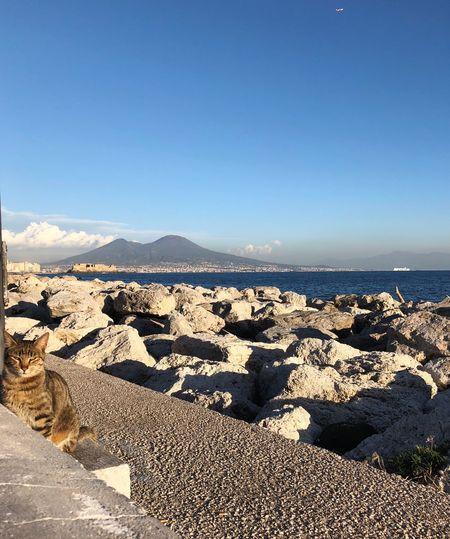 Cat and Vesuvio