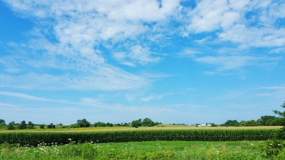 Iowa Cornfield Blue Sky White Clouds Beautiful Scene