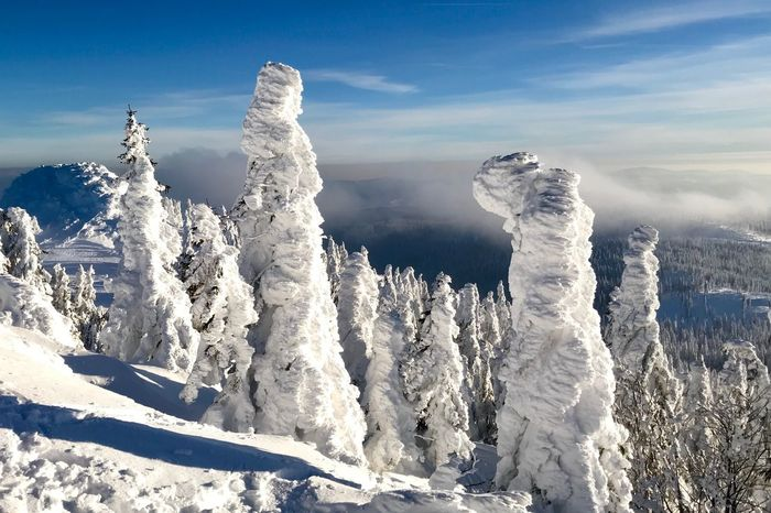 Bayerischer Wald Cold Outside Winter Wonderland Cold Temperature Winter Snow Nature Beauty In Nature Frozen White Color Ice Outdoors