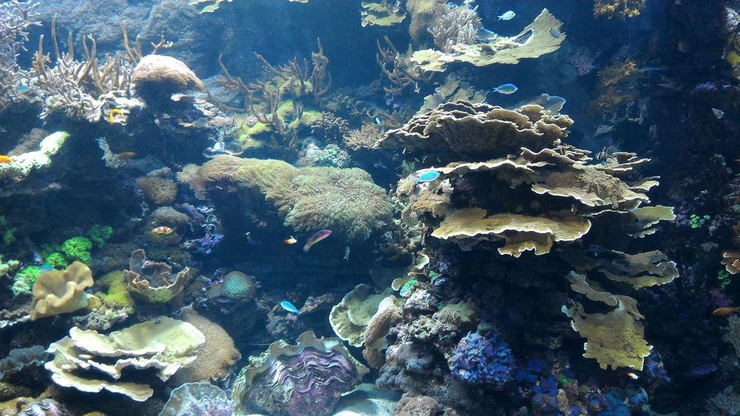 Valencia Oceanografic Ciudad De Las Artes Y Las Ciencias Aquarium Valencia, Spain España Coolasfuck