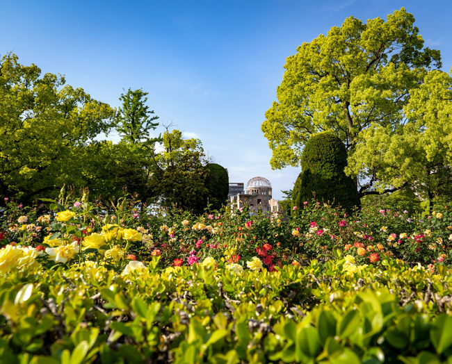 Plant Flowering Plant Flower Growth Beauty In Nature Tree Nature Freshness Architecture Sky Green Color Built Structure Day No People Building Exterior Focus On Background Fragility Sunlight Vulnerability  Land Outdoors Springtime Flowerbed