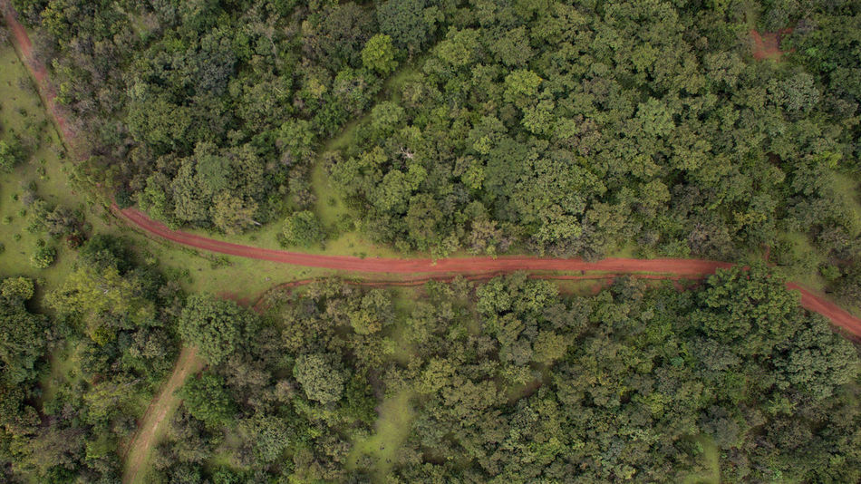 A birds eye view of a mud road passing through a forested area. Aerial Shot Perspectives On Nature Aerial Landscape Aerial Photography Aerial View Aerialphotography Beauty In Nature Day Forest Green Color High Angle View Landscape Nature No People Outdoors Plant Road Scenics Top Perspective Top View Tranquility Tree Winding Road