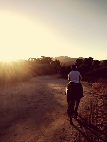 Horse in the Sun Sky Rear View Sunlight Real People One Person Nature Full Length Land Men Lifestyles Leisure Activity Landscape Lens Flare