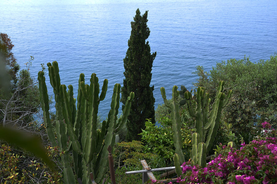 Beauty In Nature Blue Botany Cactus Day Green Color Growing Growth Mediterranean Sea Nature No People Non-urban Scene Outdoors Palm Tree Plant Positano Italy Positanocoast Scenics Sea Spiked Thorn Tranquil Scene Tranquility Tree Trunk Water
