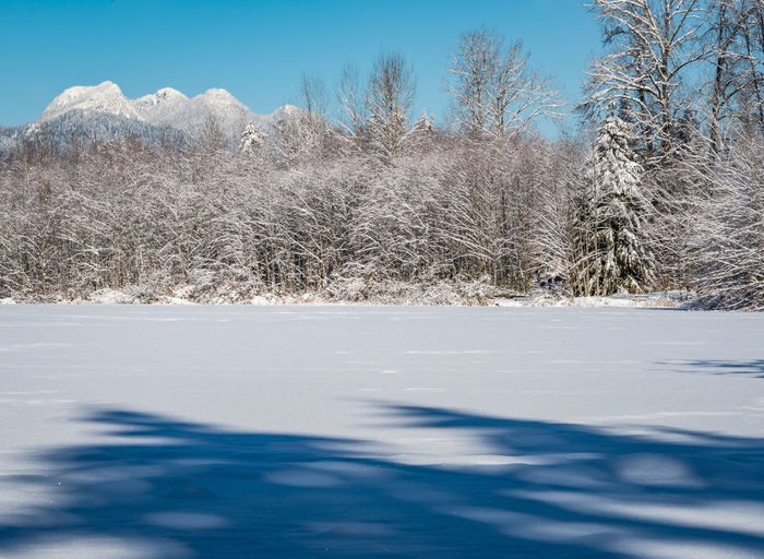 #beautifulbc #frozenlake #snowymountains #supernaturalBC Bare Tree Beauty In Nature Clear Sky Cold Temperature Day Landscape Nature No People Outdoors Scenics Sky Snow Tree Winter