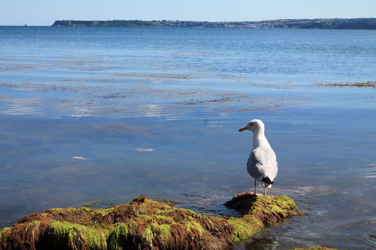 EyeEm Selects Bird Animals In The Wild Water Animal Wildlife Lake Reflection Water Bird Animal Themes Nature Outdoors One Animal Day No People Beauty In Nature Swimming Sky Horizon Over Water