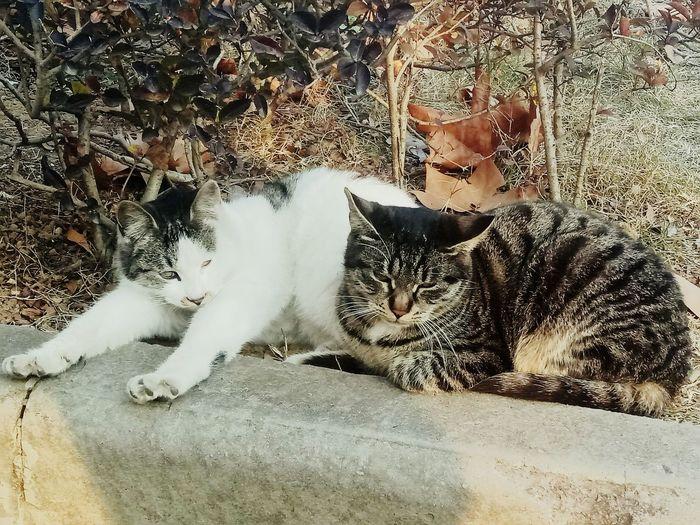 🐱🐱🐱 Pets Domestic Animals One Animal Feline Mammal Day Nature