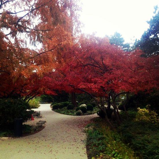 Budapest, Hungary Margaret Island Japanese Garden Fall Colors
