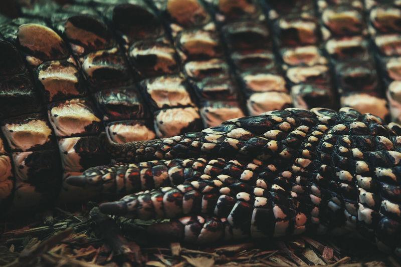Cropped image of crocodile