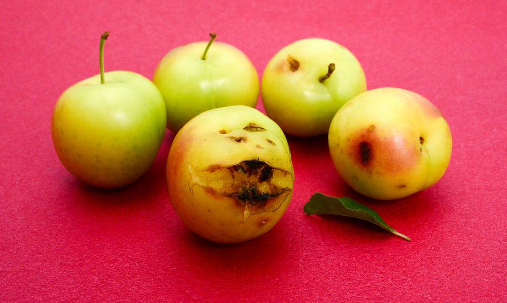 pure organic plum Chopped Green Color Backgrounds Helathy Food Leaf Oganic  Organic Fruit Overripe Plum Pure Organic Red Color Ripe Fruit Ripe Plum Sweet Plums Yellow