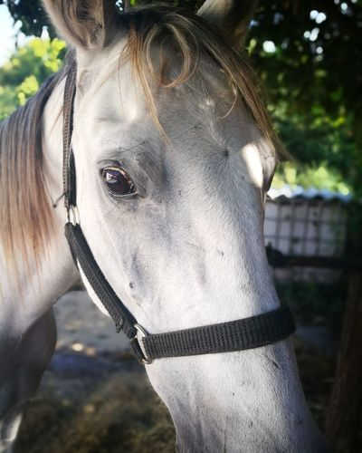 Horse Riding Horse Eating Horse Friends Portrait Rural Scene Tree Beauty Horse White Color Close-up Ranch