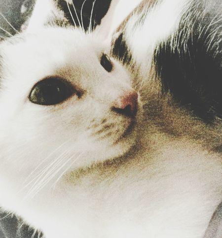 Cat Pets Animals Kitty