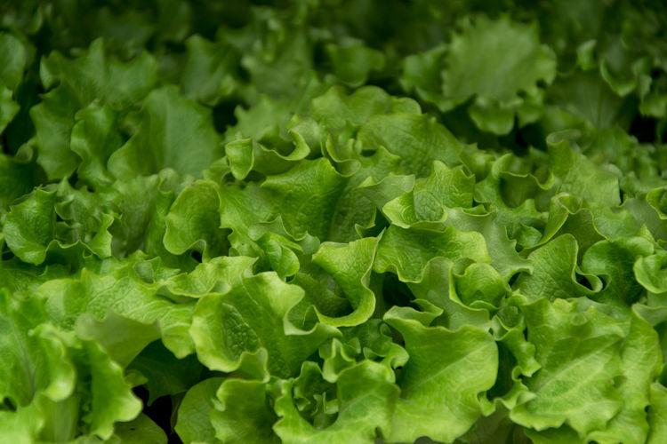 Green varieties