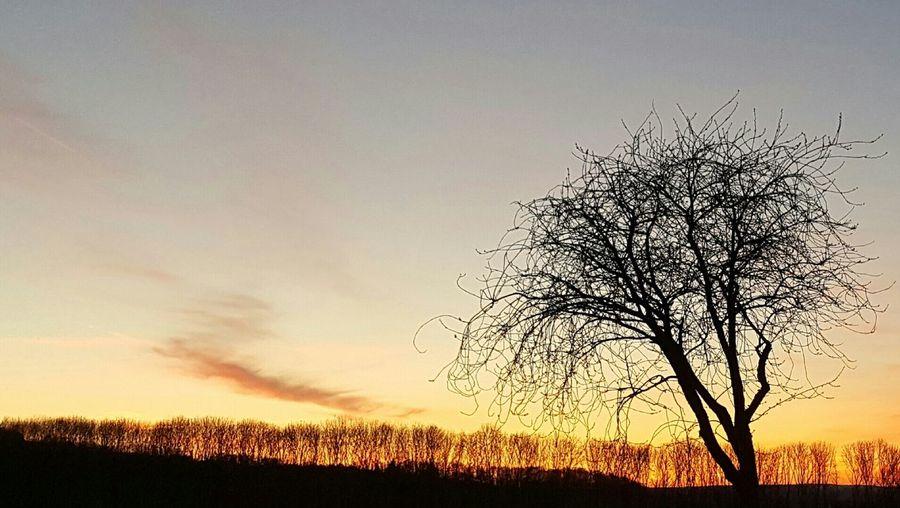 Sunset Tree Sky Landscape Sun No Filter Sonnenuntergang Bäume Sonne
