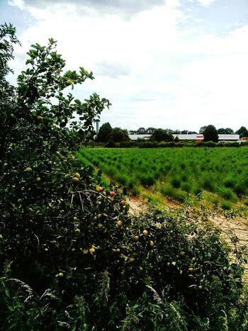 Asparagus fields forever Asparagus Fields Nature Photography Brunswick Braunschweig