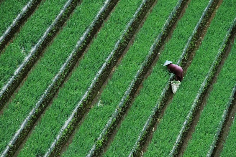High Angle View Of Farmer Working In Farm