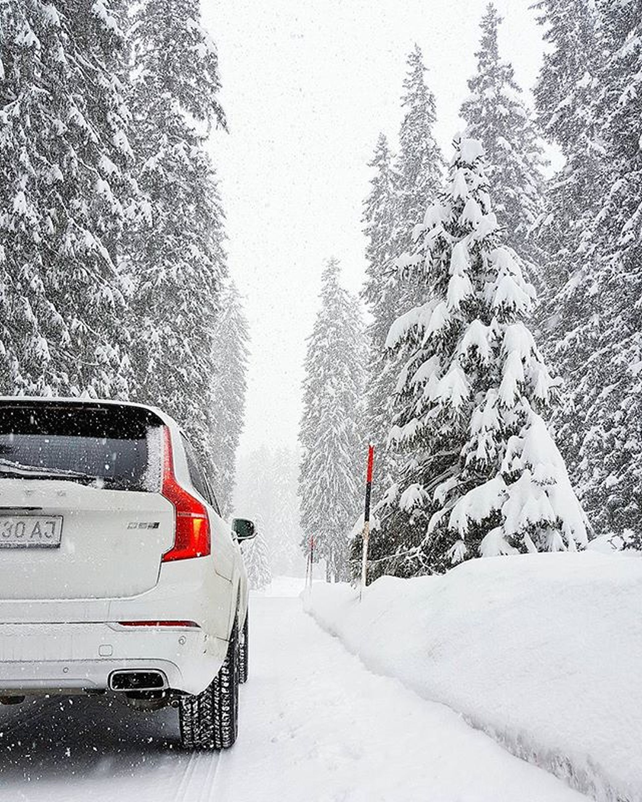 snow, winter, cold temperature, transportation, weather, season, mode of transport, car, land vehicle, road, tree, street, covering, white color, nature, day, travel, frozen, the way forward, outdoors
