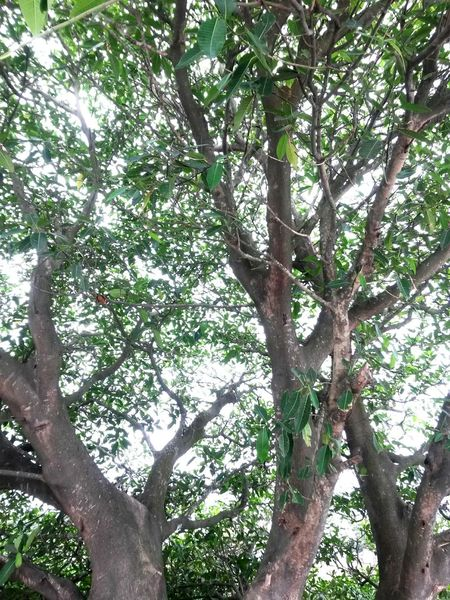 A Tree Life Light Leaves Wood Trunck Branches Photooftheday Nature Beauty In Nature Day
