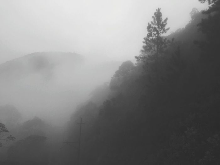 Neblina ☁🏔☁ Mountain Adventure Beauty In Nature Forest Tranquility Mountain Range Fog Morning Nature Tree Landscape Outdoors No People Vacations Day Sky Black And White Friday