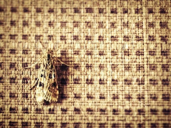 The moth blends in perfectly! No People Focus On Foreground Detail Full Frame Textile Fabric Textured Pattern Close-up Natural Pattern Selective Focus Macro Moth Lepidoptera Natural Camouflage